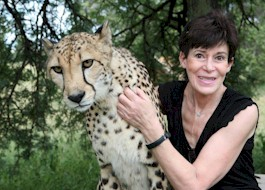 Lana at De Wildt Cheetah Research and Breeding Centre